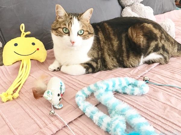 léon jouets l'île aux chats