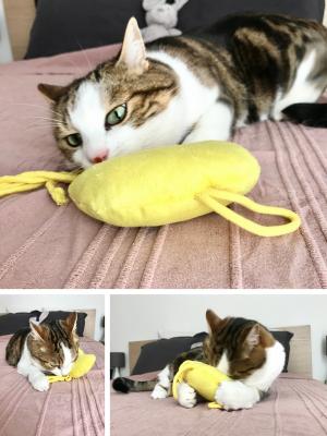 l'île aux chats montage edith la pieuvre